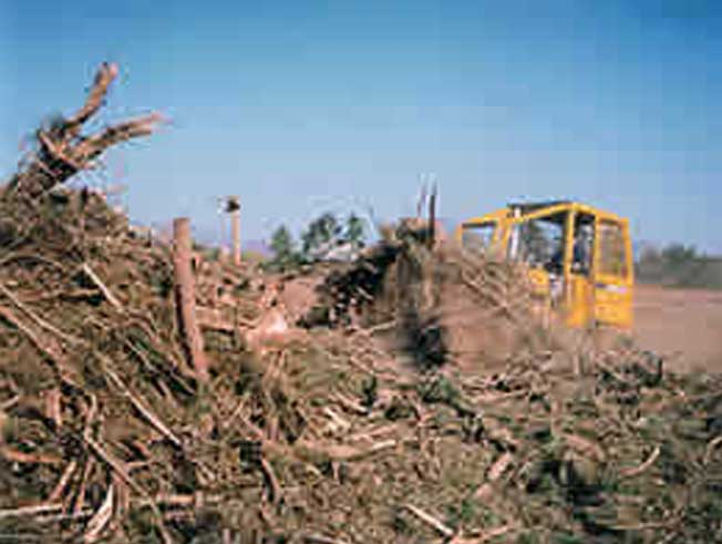 Commercial Land Clearing