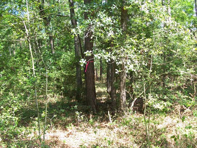 Residential Land Clearing in Magnolia, TX