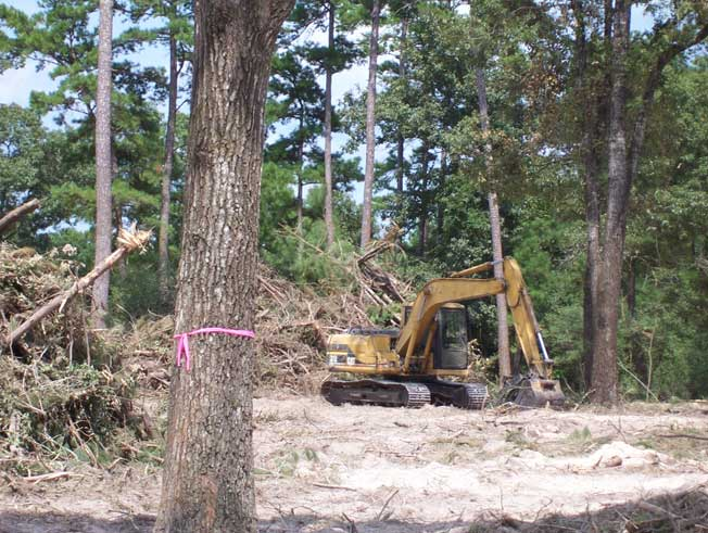 Land Clearing in TX